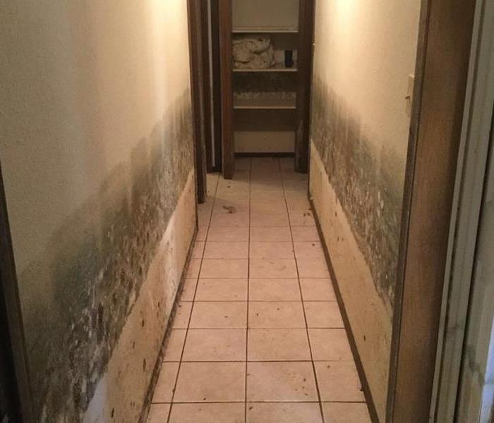 mold covered hallway