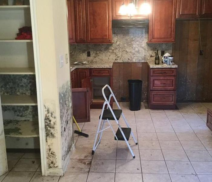 Mold growing in Bloomington Kitchen