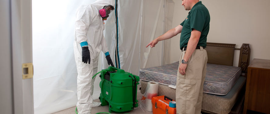Bloomington, MN mold removal process